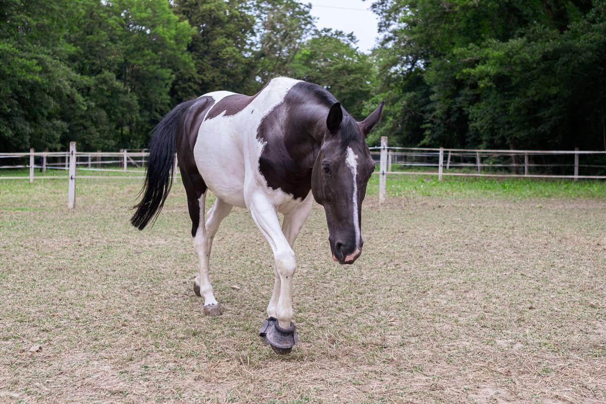 SEGURA_HORSE_TEAM