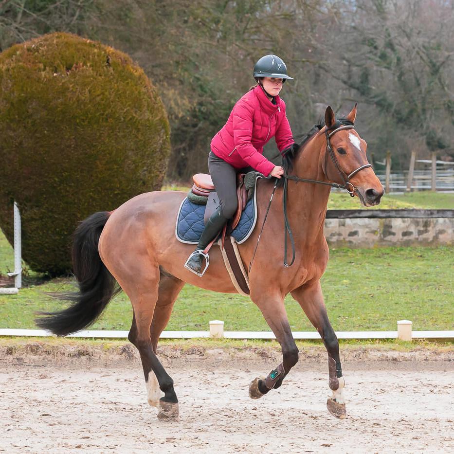 SEGURA HORSE TEAM
