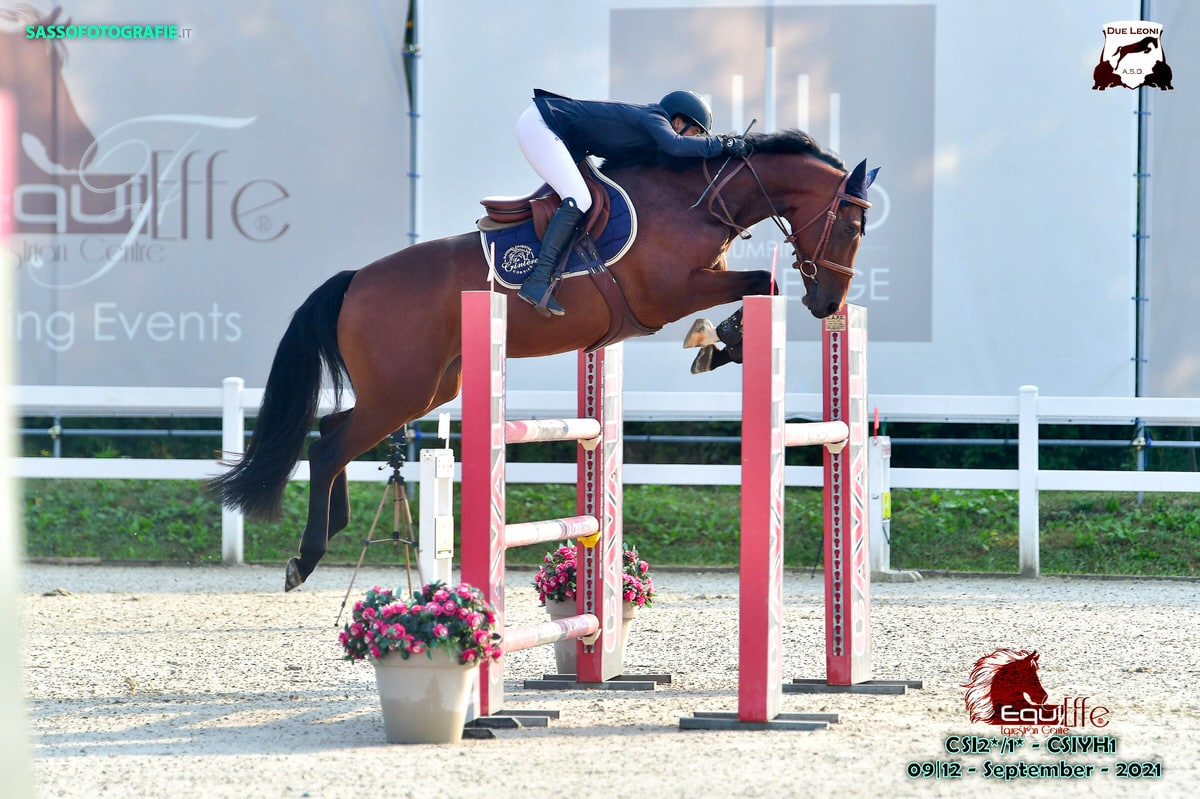 SEGURA HORSE TEAM - Patricia Segura